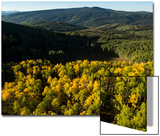 The Leaves Begin to Change Color in Early Fall in Aspen, Colorado Prints by Pete McBride
