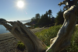 A Sculpted Piece of Driftwood in a Scenic Shore-Side Landscape Photographic Print by Jonathan Kingston