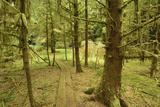 A Boardwalk Trail Through a Moss-Covered Temperate Rainforest Photographic Print by Jonathan Kingston