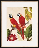 Tropical Red Pair Posters by Colleen Sarah