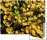 An Aerial Image of Early Fall in Aspen, Colorado Prints by Pete McBride