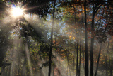 Morning Sunlight Filters Through Autumn Trees Photographic Print by Al Petteway