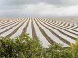 Agricultural Field in County Kerry Ireland Photographic Print by Jeff Mauritzen