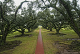 The Grounds of Oak Valley Plantation Photographic Print by Cesare Naldi