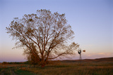 A Cottonwood Tree and a Windmill in a Prairie Landscape Photographic Print by Michael Forsberg