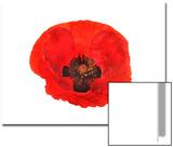 Oriental Poppy Flower, Papaver Orientale, Close Up Print by Robert Llewellyn