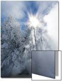 Tall Evergreens Block the Sun and Cast Sun Rays in a Misty Landscape Print by Robbie George