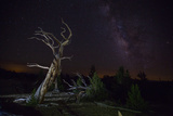 California: A Bristlecone Pine and the Milky Way Photographic Print by Ben Horton