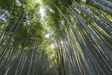 A Bamboo Forest at Sagano Bamboo Grove Photographic Print by Macduff Everton