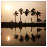 A Series of Palm Trees Stands Next to Wetlands in Kolkata Photographic Print by Sean Gallagher