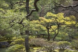 Trees and Shrubs at the Well Tended Japanese Garden at Ginkaku-Ji Photographic Print by Macduff Everton