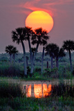 The Sun Sets Above Palms on a Cattle Ranch in the Everglades Headwaters Region of Florida Photographic Print by Carlton Ward