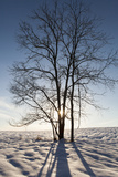 Winter Scene of the Setting Sun Shining Thru the Fork of a Leafless Tree in a Snow Covered Field Photographic Print by Hannele Lahti