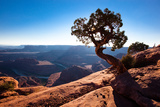 Moab, Dead Horse Point, Utah: A Lone Juniper Tree Overlooking the Colorado River, Dead Horse Point Photographic Print by Ben Horton