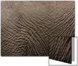 Tanzania, Africa: an Elephant's Hide Print by Ben Horton