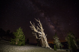 A Bristlecone Pine and the Milky Way Photographic Print by Ben Horton