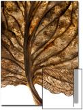 Dead Hosta Leaf Close Up Art by Robert Llewellyn