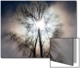 Rays of Sunlight Streaming Through Ice-Covered Tree Branches Prints by Robbie George