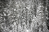 A Snow-Covered Evergreen Forest in a Mountain Valley Photographic Print by Robbie George