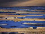 A Polar Bear, Ursus Maritimus, on the Edge of Ice Flow in Davis Strait Photographic Print by Jay Dickman