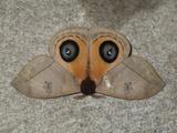 A Close Up View of an Owl Moth, Automeris Belti Fotografisk tryk af Cagan Sekercioglu