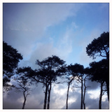 Tree Tops Against a Blue Sky Photographic Print by Sean Gallagher