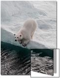 Portrait of a Polar Bear, Ursus Maritimus, on an Ice Floe at the Water's Edge Art by Jay Dickman
