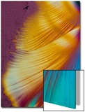 A Photomicrograph, a Picture Taken Through a Microscope, of Dextrose Print by Cesare Naldi