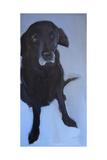 Black Labrador Giclee Print by Sally Muir