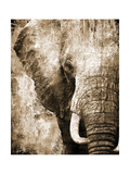 African Animals I - Sepia Posters by Eric Yang