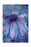 Cone Flower, Blue, Blue Flower, Echinacea Giclee Print by Scott J. Davis