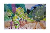 Chardonnay Val D'Orb Giclee Print by Simon Fletcher