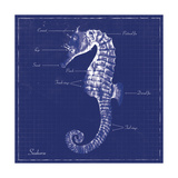 Blueprint Seahorse Prints by Piper Ballantyne
