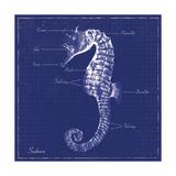 Blueprint Seahorse Prints by Piper Ballantyne