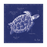 Blueprint Sea Turtle Print by Piper Ballantyne