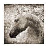 Majestic Horse Prints by Eric Yang