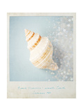 Beach Memories Small Conch Posters by Susannah Tucker