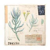 Senecio…Sketchbook Posters by Angela Staehling