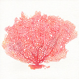 Watercolor Coral II Art by Jario Rodriguez