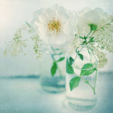 White Peonies Prints by Sarah Gardner