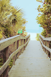 Palm Walkway II Sztuka autor Susan Bryant