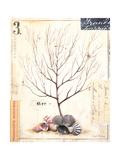 Coral Sketchbook Prints by Angela Staehling