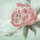 Pink Peonies II Poster by Patricia Pinto