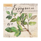Evergreen Branch…Sketchbook Poster by Angela Staehling