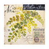 Maidenhair Fern…Sketchbook Posters by Angela Staehling