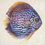 Little Fish I Kunst von Patricia Pinto