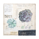 Echeveria…Sketchbook Prints by Angela Staehling