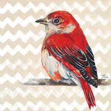 Cheveron Baby Red Bird II Kunstdrucke von Patricia Pinto