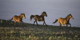 Horses in the Meadow II Prints by Carol Walker