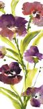 Violet le Povat I Prints by Lanie Loreth